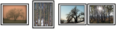 Clark Reeh Photography Notecard Collections - Trees Set of four original unique photos